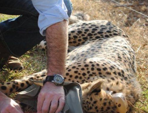 Specialist Safari