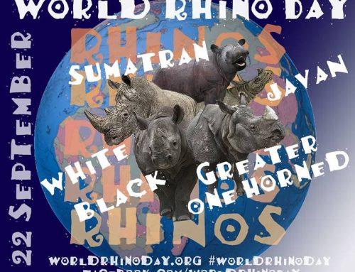 World Rhino Day – 22 September 2013