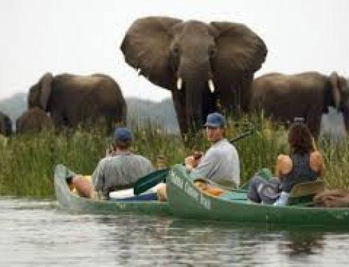 Canoeing in Zimbabwe